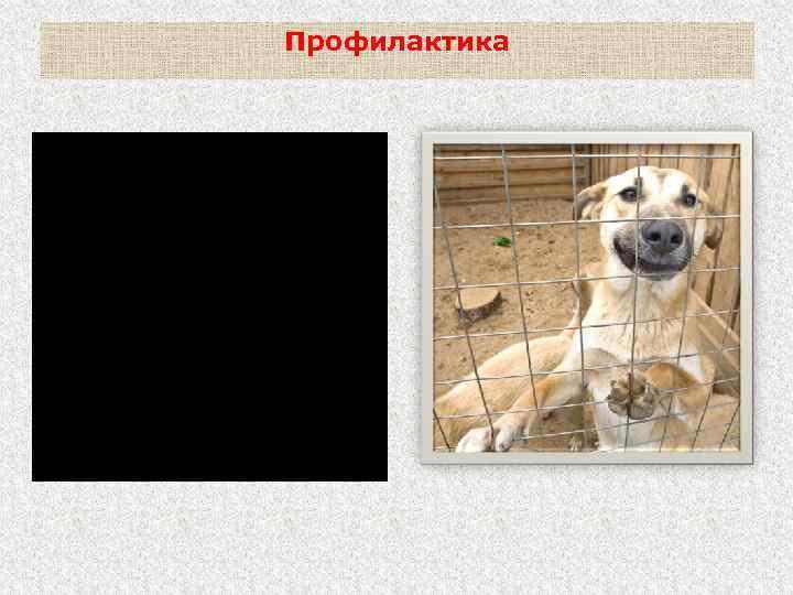 Профилактика Покусавшие людей или животных собаки и кошки и другие животные (кроме явно больных