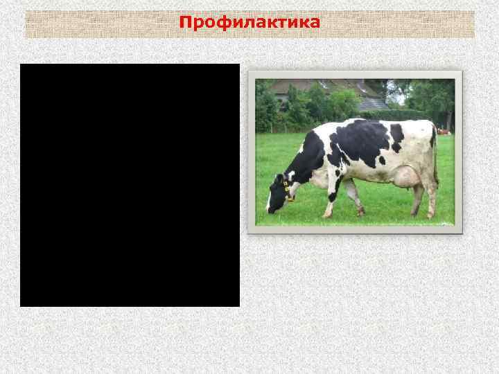Профилактика бешенства с/х животных: - охрана от нападения хищников; - профилактическая вакцинация в зонах