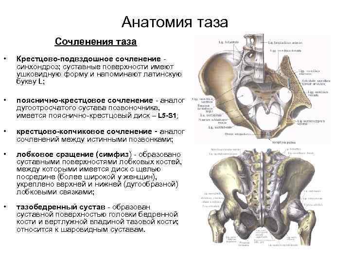 У грудных позвонков имеются суставы поверхности для сочленения с физиотерапия суставов токами