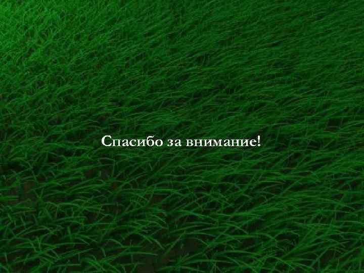 Свадьба, картинка анимация трава