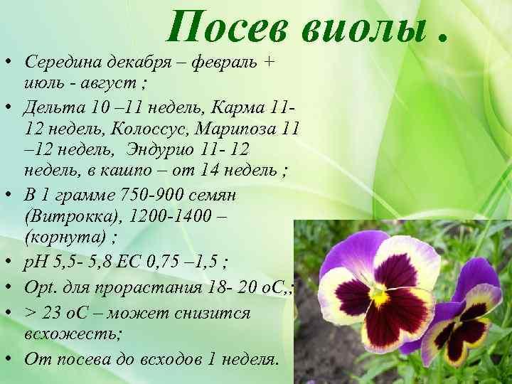 Посев виолы. • Середина декабря – февраль + июль - август ; • Дельта