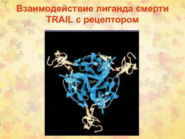 Взаимодействие лиганда смерти TRAIL с рецептором