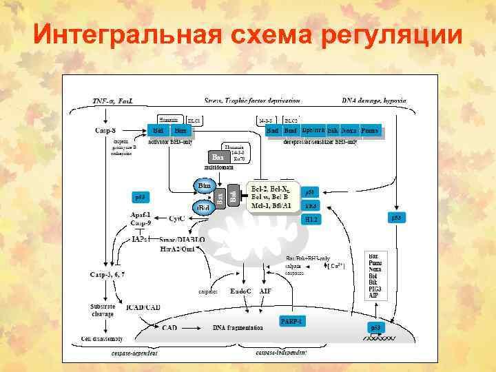 Интегральная схема регуляции