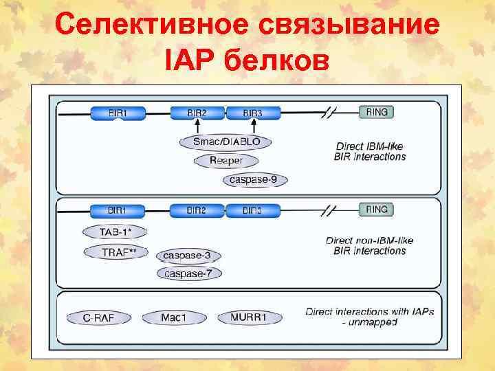 Селективное связывание IAP белков