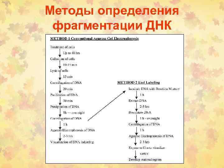 Методы определения фрагментации ДНК