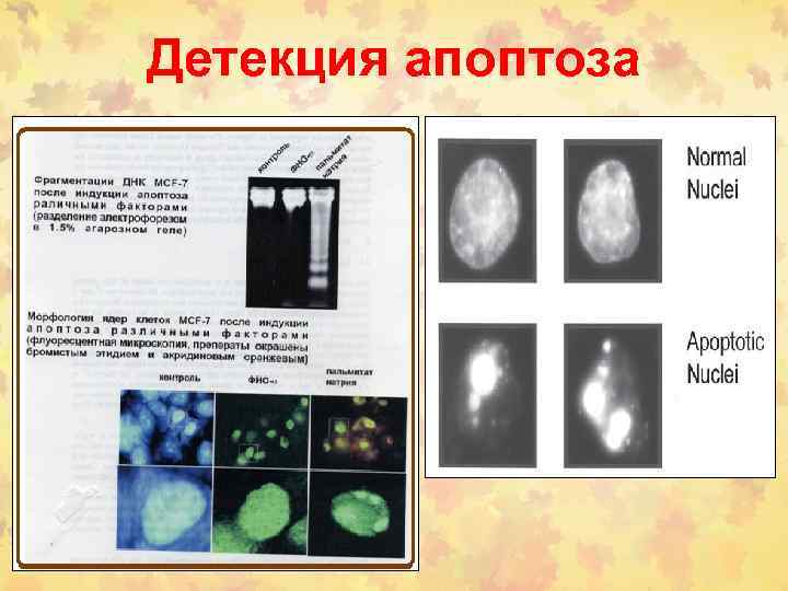 Детекция апоптоза