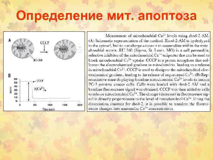 Определение мит. апоптоза
