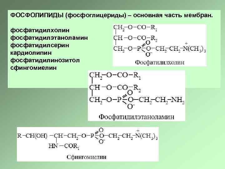 ФОСФОЛИПИДЫ (фосфоглицериды) – основная часть мембран. фосфатидилхолин фосфатидилэтаноламин фосфатидилсерин кардиолипин фосфатидилинозитол cфингомиелин