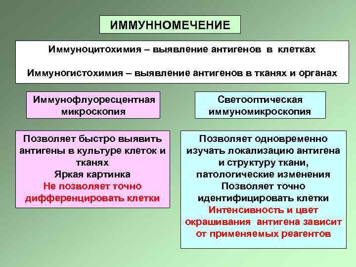 ИММУННОМЕЧЕНИЕ Иммуноцитохимия – выявление антигенов в клетках Иммуногистохимия – выявление антигенов в тканях и