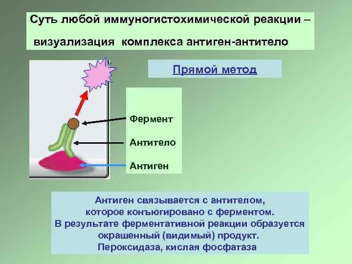 Суть любой иммуногистохимической реакции – визуализация комплекса антиген-антитело Прямой метод Фермент Антитело Антиген связывается
