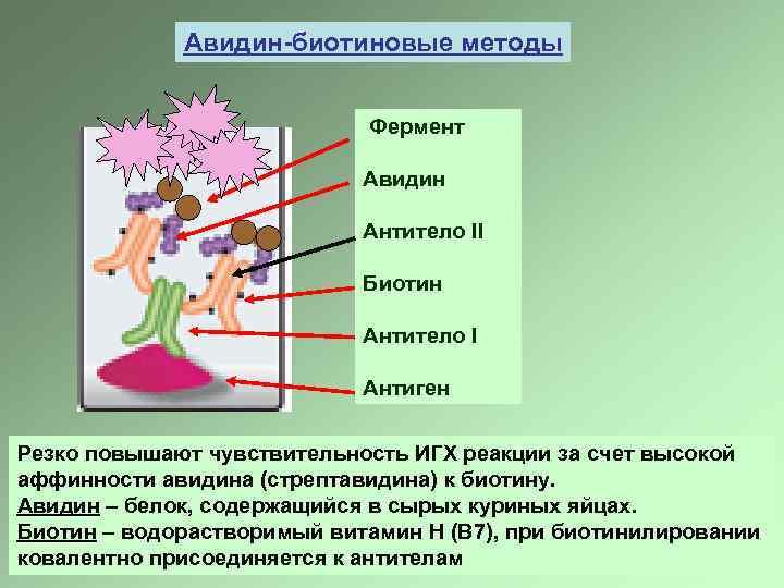 Авидин-биотиновые методы Фермент Авидин Антитело II Биотин Антитело I Антиген Резко повышают чувствительность ИГХ