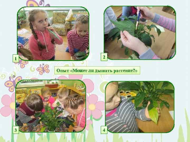 1 2 Опыт «Может ли дышать растение? » 3 4