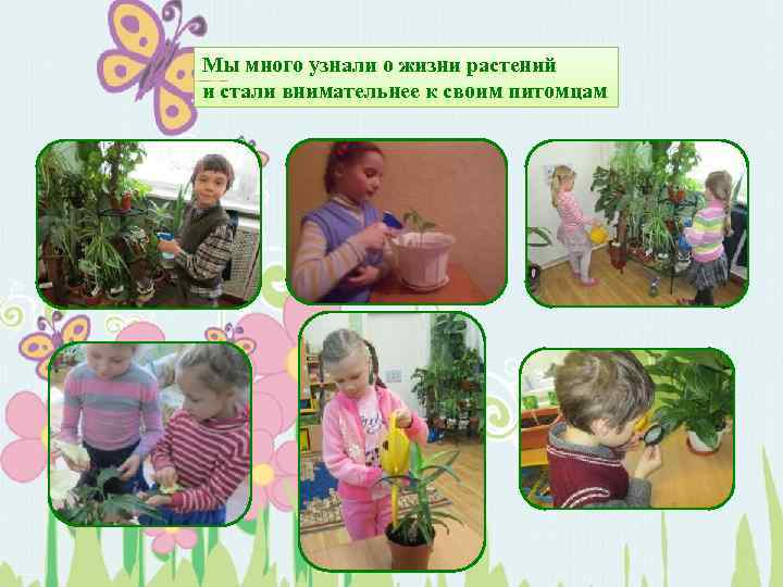 Мы много узнали о жизни растений и стали внимательнее к своим питомцам