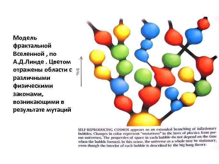 Модель фрактальной Вселенной , по А. Д. Линде. Цветом отражены области с различными физическими
