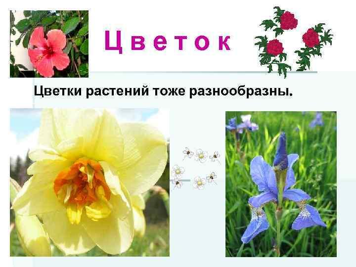 Цветок Цветки растений тоже разнообразны.