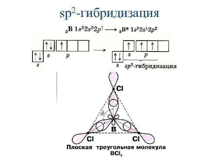 2 -гибридизация sp