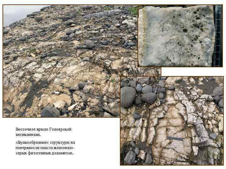 Восточное крыло Голоярской антиклинали. «Булкообразные» структуры на поверхности пласта желтоватосерых фитогенных доломитов.