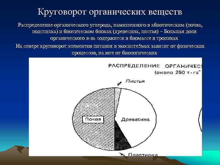 Круговорот органических веществ Распределение органического углерода, накопленного в абиотическим (почва, подстилка) и биотическом блоках
