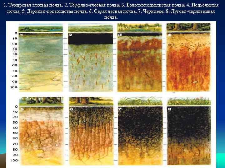 1. Тундровая глеевая почва. 2. Торфяно-глеевая почва. 3. Болотноподзолистая почва. 4. Подзолистая почва. 5.