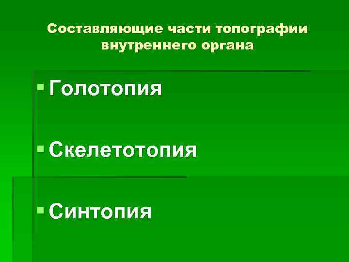 Составляющие части топографии внутреннего органа § Голотопия § Скелетотопия § Синтопия