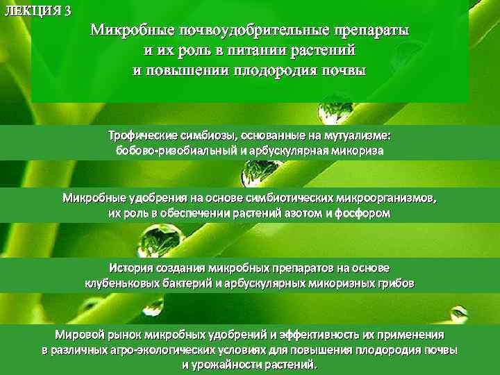 ЛЕКЦИЯ 3 Микробные почвоудобрительные препараты и их роль в питании растений и повышении плодородия