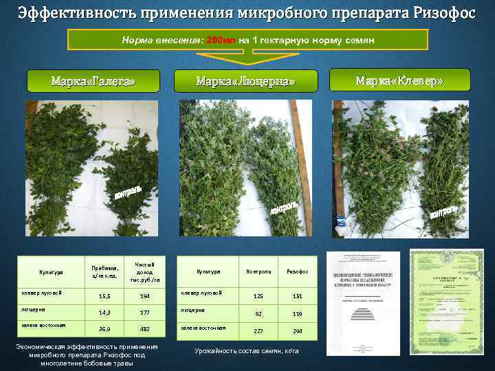 Эффективность применения микробного препарата Ризофос Норма внесения: 200 мл на 1 гектарную норму семян