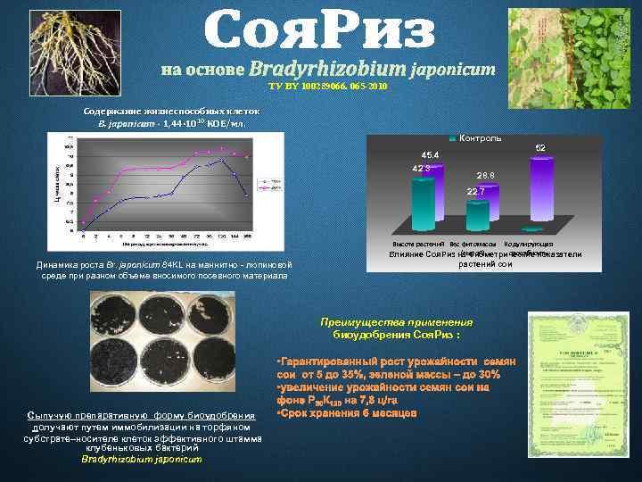 ТУ BY 100289066. 065 -2010 Содержание жизнеспособных клеток B. japonicum - 1, 44∙ 1010