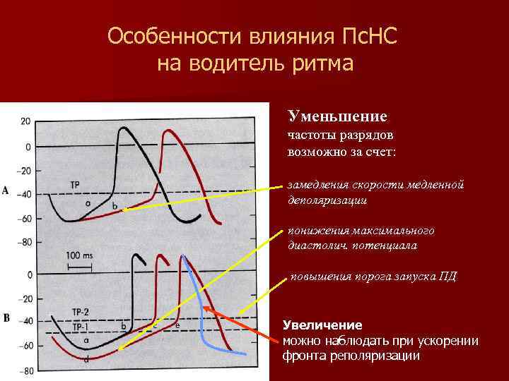 Особенности влияния Пс. НС на водитель ритма Уменьшение частоты разрядов возможно за счет: замедления