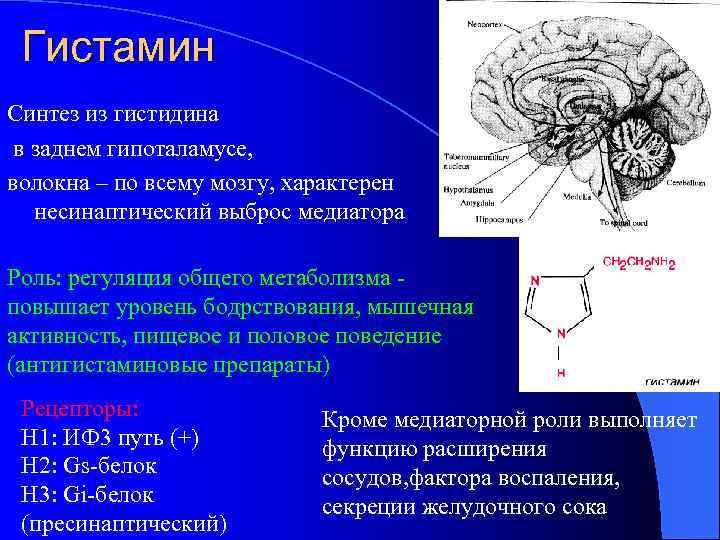 Гистамин Синтез из гистидина в заднем гипоталамусе, волокна – по всему мозгу, характерен несинаптический