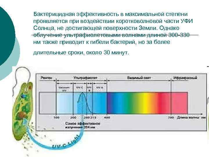 Бактерицидная эффективность в максимальной степени проявляется при воздействии коротковолновой части УФИ Солнца, не достигающей