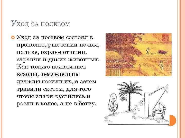 УХОД ЗА ПОСЕВОМ Уход за посевом состоял в прополке, рыхлении почвы, поливе, охране от