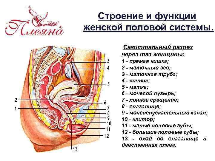 окуратные каких размеров бывает клитор мастурбирует, время