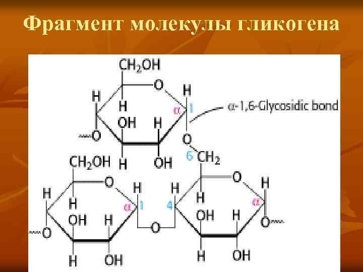 Фрагмент молекулы гликогена