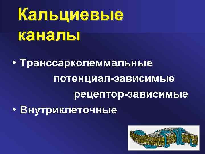 Блокаторы кальциевых каналов (антагонисты кальция)