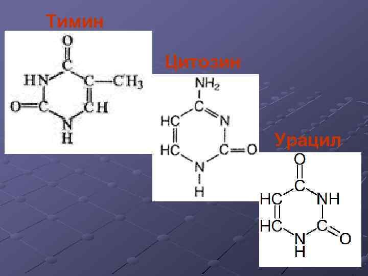 Тимин Цитозин Урацил