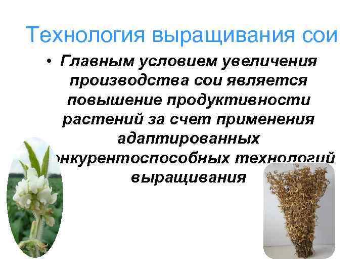 Технология выращивания сои • Главным условием увеличения производства сои является повышение продуктивности растений за