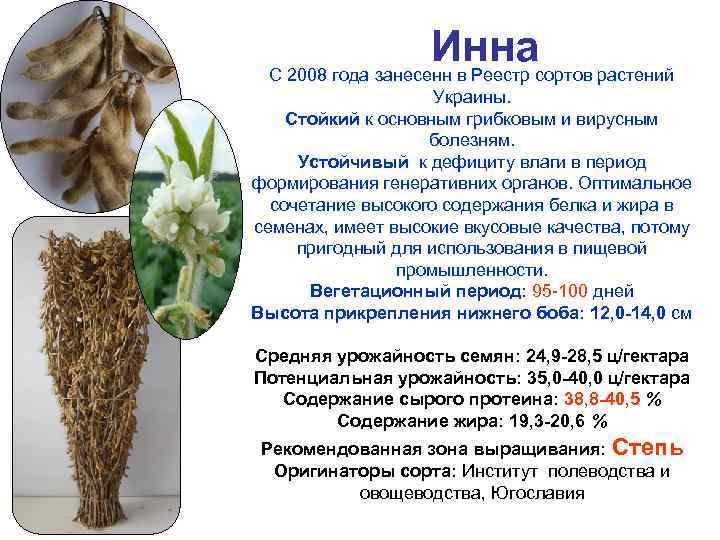 Иннасортов растений С 2008 года занесенн в Реестр Украины. Стойкий к основным грибковым и