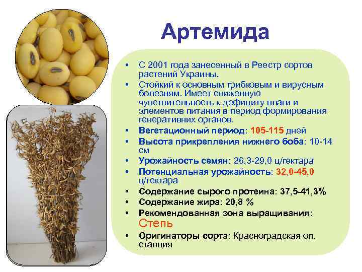 Артемида • • • С 2001 года занесенный в Реестр сортов растений Украины. Стойкий