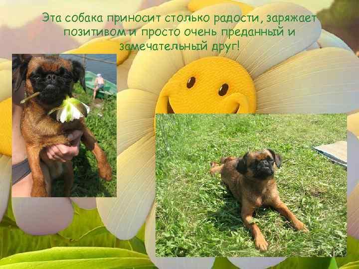 Эта собака приносит столько радости, заряжает позитивом и просто очень преданный и замечательный друг!