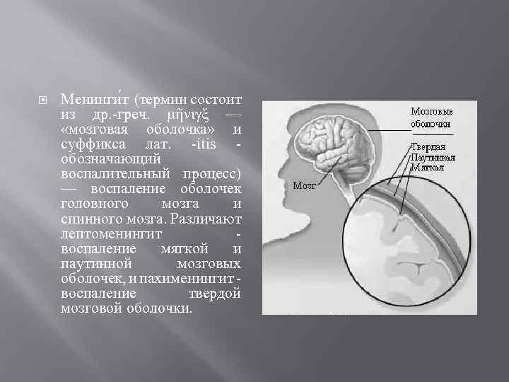 Менинги т (термин состоит из др. -греч. μῆνιγξ — «мозговая оболочка» и суффикса