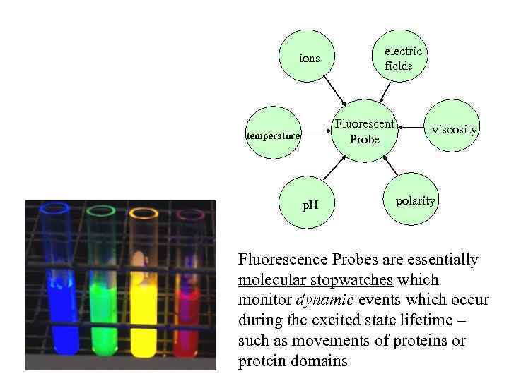 ions electric fields Fluorescent Probe temperature p. H viscosity polarity Fluorescence Probes are essentially