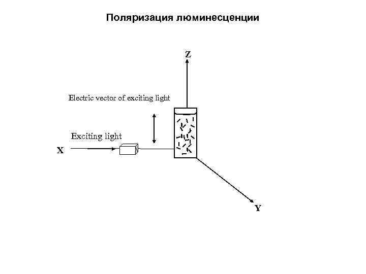 Поляризация люминесценции Z Electric vector of exciting light Exciting light X O Y