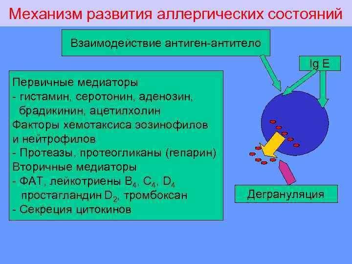 Механизм развития аллергических состояний Взаимодействие антиген-антитело Ig E Первичные медиаторы - гистамин, серотонин, аденозин,