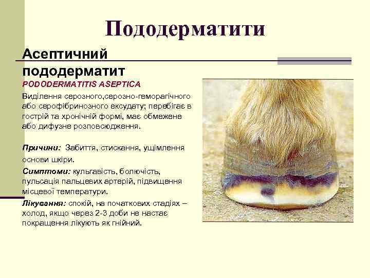 Пододерматити Асептичний пододерматит PODODERMATITIS ASEPТICA Виділення серозного, серозно-геморагічного або серофібринозного ексудату; перебігає в гострій