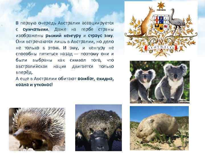В первую очередь Австралия ассоциируется с сумчатыми. Даже на гербе страны изображены рыжий кенгуру