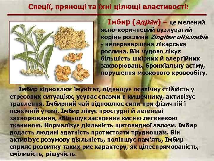 Спеції, прянощі та їхні цілющі властивості: Імбир (адрак) – це мелений ясно-коричневий вузлуватий корінь