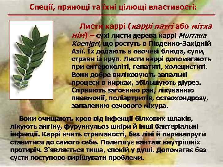 Спеції, прянощі та їхні цілющі властивості: Листи каррі (каррі патгі або мітха нім) –