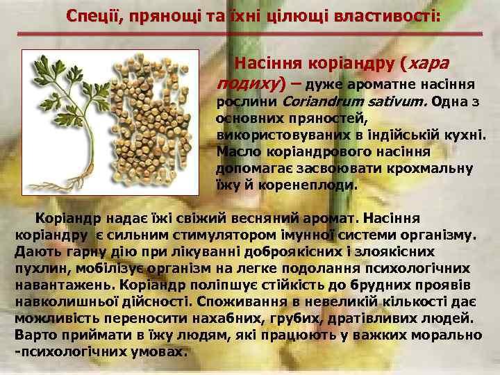 Спеції, прянощі та їхні цілющі властивості: Насіння коріандру (хара подиху) – дуже ароматне насіння