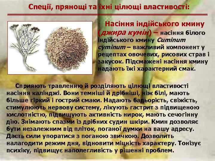 Спеції, прянощі та їхні цілющі властивості: Насіння індійського кмину (джира кумін) – насіння білого