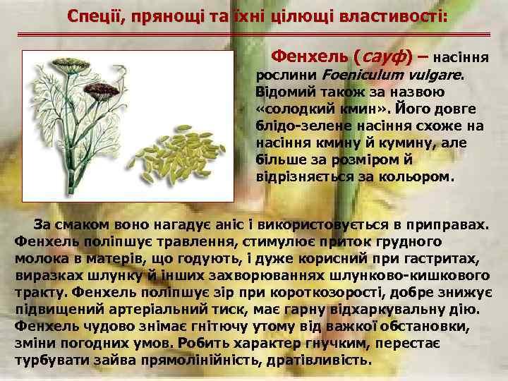 Спеції, прянощі та їхні цілющі властивості: Фенхель (сауф) – насіння рослини Foeniculum vulgare. Відомий